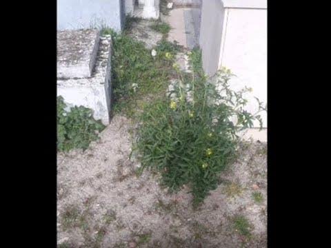 Gana Medina denuncia las plagas de ratas en Medina y el estado de los cementerios