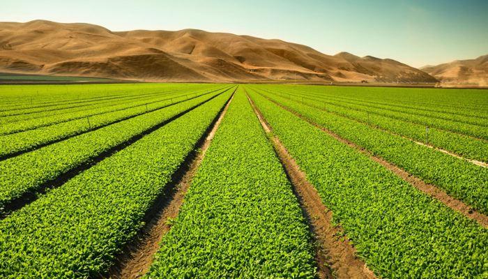 Publicado en el BOE la orden de módulos del IRPF 2020 con las reducciones para agricultores y ganaderos