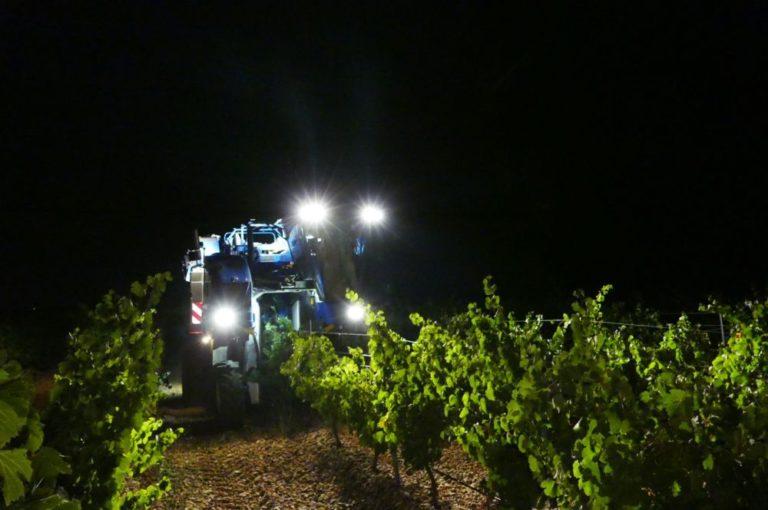 Finaliza la 40 vendimia de la D.O. Rueda con grandes expectativas en la calidad de los vinos